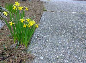 spring driveway maintenance